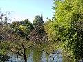 Bucuresti, Romania, Parcul Herastrau (Vegetatie cu turla Bisericii); B-II-a-A-18802.JPG