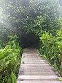 Bukit Lima Nature Reserve 2.jpg