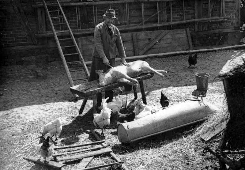 Bundesarchiv Bild 183-2005-0728-524, Schlachtung eines Schweins