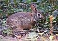 Bunny (30107041967).jpg