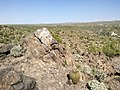 Butcher Jones Trail - Mt. Pinter Loop Trail, Saguaro Lake - panoramio (154).jpg