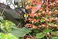 Butterfly Rainforest FMNH 27.jpg