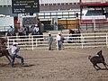 CFD Tie-down roping Tyler Prcin -1.jpg