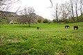 Caballos y vacas.jpg