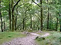 Cairns in a wood near Stonethwaite - geograph.org.uk - 878686.jpg
