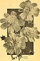 California gardening (1933) (20514680275).jpg