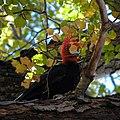 Carpintero Negro Reserva Nacional Altos de Lircay 07.jpg