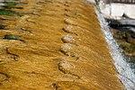 Cascadas jardín Caserta 21.jpg