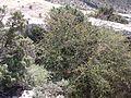 Castellar de Meca octubre dos mil dieciseis 10.jpg