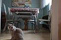 Cat by table (36789030824).jpg