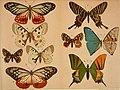Causeries scientifiques (1900-1905) (20586980805).jpg