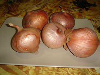 Figueres onion - The Figueres onion