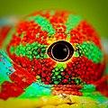 Chameleon eye.jpg