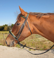 Chestnut Horse With Loose Ring Snaffle Bit.png