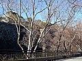 Chinese elms, Osaka Castle 1 (2).jpg