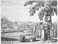 Chodowiecki Basedow Tafel 16 c.jpg