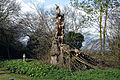 Church of St Mary and St Christopher, Panfield - churchyard dead tree 1.jpg