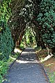 Church of St Mary the Virgin, Woodnesborough, Kent - churchyard path yew avenue 02.jpg