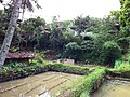Cideres, Sukamenak, Sukaresik, Tasikmalaya, Jawa Barat, Indonesia - panoramio (12).jpg