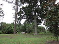 City Park NOLA June 2011 Bayou Island.JPG
