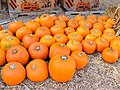 Clancy's Pumpkin Patch with Halloween backdrop (22500111515).jpg