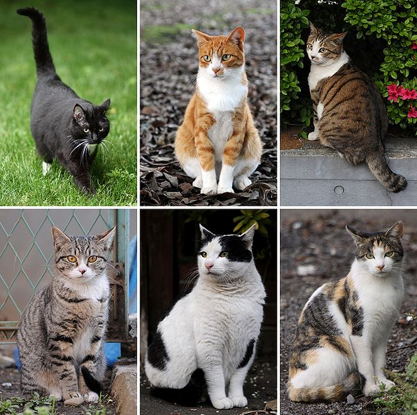 Tiedosto:Collage of Six Cats-01.jpg