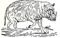 Collier's 1921 Hog Babiroussa.png