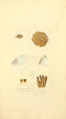 Coloured Figures of English Fungi or Mushrooms - t. 183.png