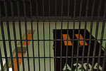 Communal living cell block inside Camp VI Detention Facility 130207-A-Sq484-026.jpg