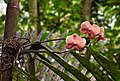 Coral color orchids on palm (32830293704).jpg
