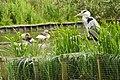 Corby, UK - panoramio (20).jpg