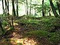 Covorul pădurii - panoramio.jpg