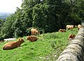 Cows may safely graze^ - Stock Lane - geograph.org.uk - 909746.jpg