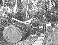 Crew and dragsaw, ca 1918 (KINSEY 753).jpeg