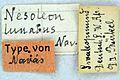 Cueta lunata type labels.JPG
