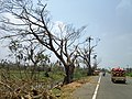 Cyclone Fani Aftermath in Odisha's Puri-Cuttack Road.jpg