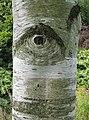 Cyclops^ - geograph.org.uk - 523378.jpg