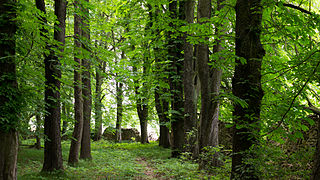 D31 Frauenteich Moritzburg Naturschutzgebiet (13).jpg