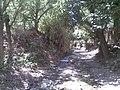Dardeh-jorsereh - panoramio - rasoul.tajeddin.jpg