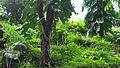 Darjeeling rock gardens starting.jpg