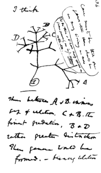 Charles Darwin's 1837 sketch, his first diagra...
