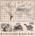Das Kürschner-Handwerk, II. Auflage 3. Teil, S. 60, Weltkarte Verbreitung der Viscacha, Chinchilla, Hamster und Bilch (1910).jpg