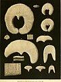 Denkschriften der Kaiserlichen Akademie der Wissenschaften - Mathematisch-Naturwissenschaftliche Classe (1854) (20841400712).jpg