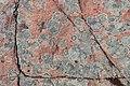 Detail růžové žuly - panoramio.jpg