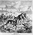 Die Gartenlaube (1874) b 057.jpg