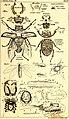Die Geschichte der Natur - als zweite gänzlich umgearbeitete Auflage der allgemeinen Naturgeschichte (1837) (14798829273).jpg