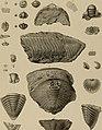 Die Versteinerungen des rheinischen Schichtensystems in Nassau. Mit einer kurzgefassten Geognosie dieses Gebietes und mit steter Berücksichtigung analoger Schichten anderer Lander (1850) (14597505938).jpg
