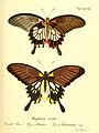 Die ausländischen Schmetterlinge in Abbildungen nach der Natur (Tab. XXVIII) (6012540482).jpg