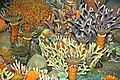 Diorama of a Devonian seafloor - corals 3 (30717353577).jpg