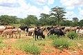 Dodoma, Tanzania - panoramio.jpg